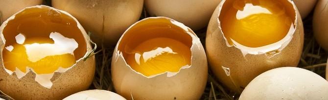 Eier & Fleisch